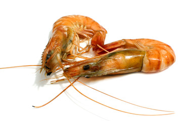 Tiger shrimp isolated