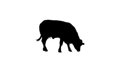 cow 9