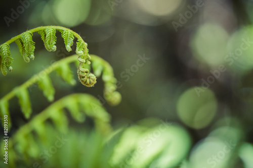 Foto op Canvas Oceanië Unravelling fern frond closeup, one of New Zealand symbols.