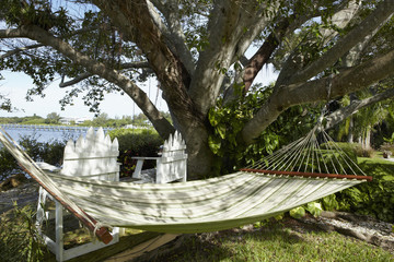 Hammock Under a Tree