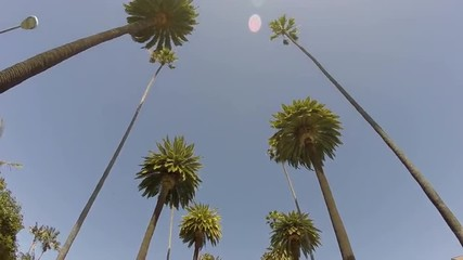 Beverly Hills California Palms