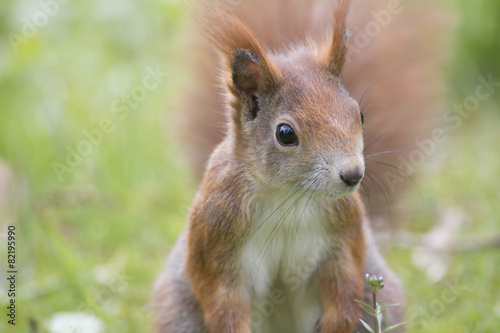 In de dag Eekhoorn Eichhörnchen