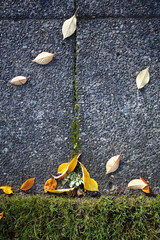 Leaves on Sidewalk