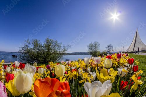 Foto op Canvas Tulp Tulpen und Konzertsegel in Radolfzell am Bodensee