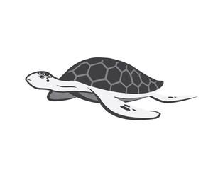 Turtle v.2