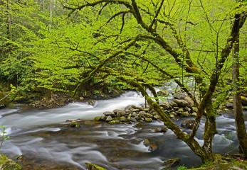 Spring white water stream in the Smokies.