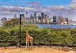 canvas print picture - Sydney City Whole Giraffe