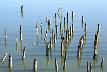 Old Wood Pilings in Water, Oregon, USA