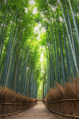 Bamboo Forest in Japan, Arashiyama, Kyoto © SANCHAI