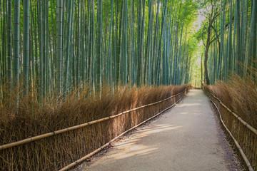 Bamboo Forest in Japan, Arashiyama, Kyoto © SANCHAI