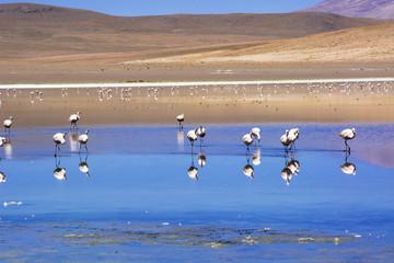 アルティプラーノ平原のカニャパ湖