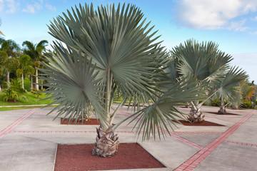 parc des palmiers, Tampon, île de la Réunion