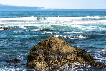 The waves,the rocks and the kelp, Fort Bragg