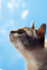 beautiful cat and blue sky