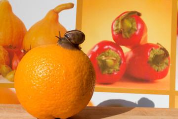 snail crawling on orange