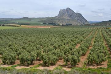 Antequera, peña de los Enamorados, paisaje rural, olivos
