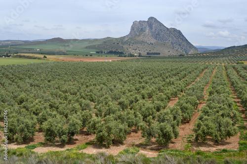 Antequera, peña de los Enamorados, paisaje rural, olivos - 82236746
