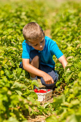 Boy in strawberry field