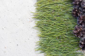 background of pine needles