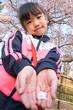 桜の花びらを持った女の子