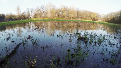 Flooded meadow