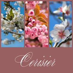composition cerisier en fleurs