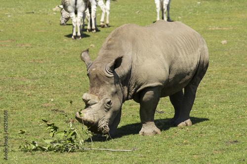 Tuinposter Neushoorn Rinoceronte 02