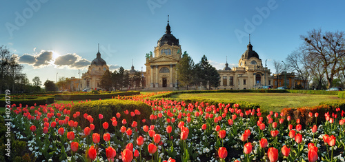 Foto op Plexiglas Oost Europa Budapest - spring panorama with flower, Szechenyi Spa, Hungary