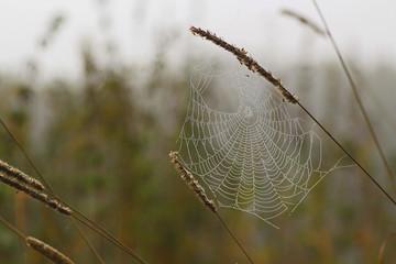 Spinnennetz im Tau