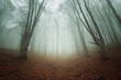 Mysterious dark autumn forest in fog with orange leaves