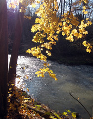 Afternoon sun lights up autumn leaves on trees along riverside.