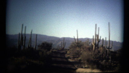 (1960's 8mm Vintage) Organ Pipe Cactus National Monument