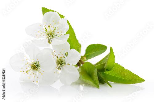 Aluminium Kersen Cherry blossom