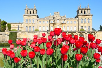 Blenheim Palace with red tulips in foreground
