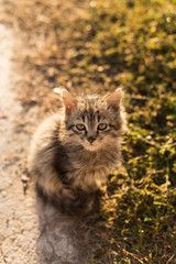 little cat with green eyes