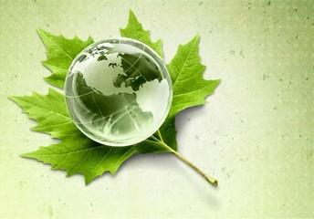 Alternative Energy. Globe on Leaf