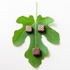 Chocolate candies truffles on green leaf.