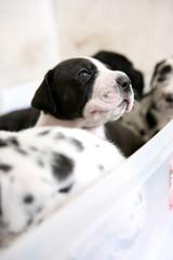 Pet cucciolo di cane