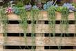 succulent flowers growing along wooden fence in garden - 82316133