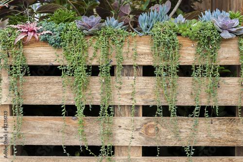succulent flowers growing along wooden fence in garden