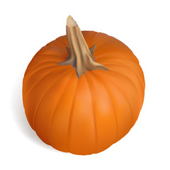 Pumpkin on white background for  Thanksgiving or Autumn designs