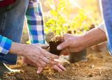Fototapety Senior couple planting seedlings in their garden