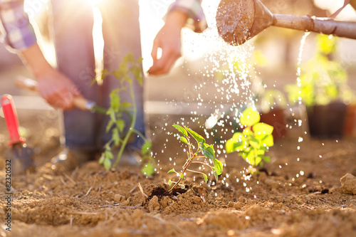 Senior couple watering seedlings in their garden