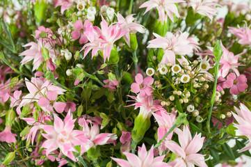 dettaglio di fiori in giaridino