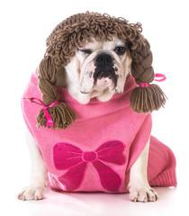 female dog winking