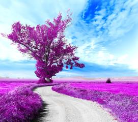 Paisaje surrealista. Arbol y camino entre los campos