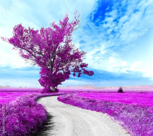 Paisaje surrealista. Arbol y camino entre los campos - 82325913