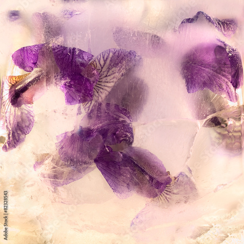Foto op Aluminium Iris Frozen flower of iris