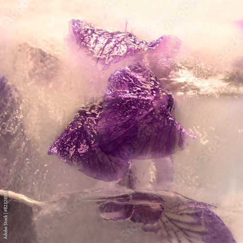 Foto op Canvas Iris Frozen flower of iris