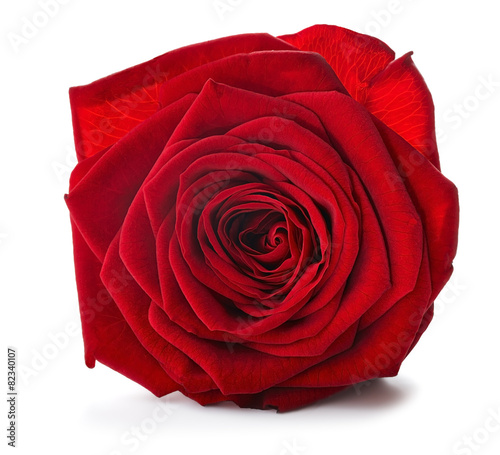 Deurstickers Roses Red Rose close up